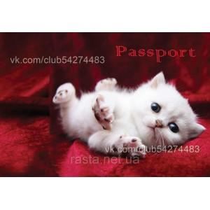 Обложка на паспорт  Котенок